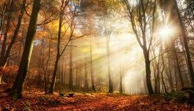 Bristning av solstrålar i en dimmig höstskog royaltyfria foton