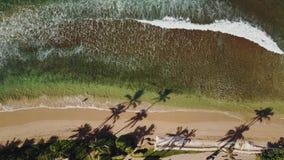 Bristning av vågen på den rena near semesterorten för sandig strand med den tropiska naturen på maui, hawaii lager videofilmer