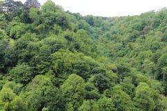 Bristol Trees Royalty-vrije Stock Afbeeldingen