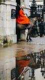Británicos montados guardan en caballo en la tierra de desfile de los guardias de caballo en Whitehall, reflexión en el charco -  fotografía de archivo libre de regalías