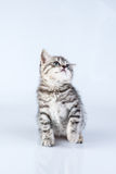 Britain's little kitten Stock Photo