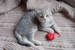 Britain's little kitten hunts. Britain's little kitten is hunting for something Stock Image