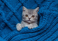 Britain's little kitten sleeps Stock Photo