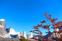 Britanico View Point Torres del Paine National Park Stock Image