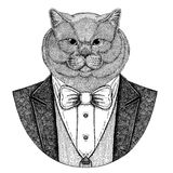 Brithish noble cat Hipster animal Hand drawn image for tattoo, emblem, badge, logo, patch, t-shirt Stock Photo