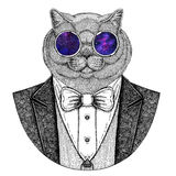 Brithish noble cat Hipster animal Hand drawn image for tattoo, emblem, badge, logo, patch, t-shirt Royalty Free Stock Image