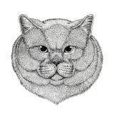 Brithish noble cat Male Hand drawn illustration for tattoo, emblem, badge, logo, patch Isolated on white background Stock Image