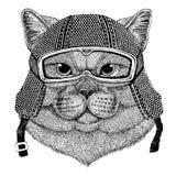 Brithish noble cat Male wearing vintage motorcycle helmet Tattoo, badge, emblem, logo, patch, t-shirt royalty free illustration