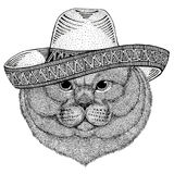 Brithish noble cat Male Wild animal wearing sombrero Mexico Fiesta Mexican party illustration Wild west. Wild animal wearing sombrero Mexico Fiesta Mexican party stock illustration