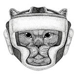 Brithish noble cat Male Wild boxer Boxing animal Sport fitness illutration Wild animal wearing boxer helmet Boxing Royalty Free Stock Photos