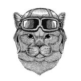 Brithish noble cat wearing leather helmet Aviator, biker, motorcycle Hand drawn illustration for tattoo, emblem, badge Royalty Free Stock Photography