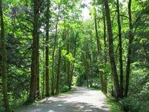 Britisch-Columbia-Hinterwälder Lizenzfreies Stockfoto