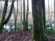 Britisch-Columbia-Sumpf Lizenzfreies Stockbild