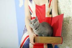 Britisch Kurzhaar-Baby Stockbild