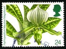 BRITISCHE Briefmarke Paphiopedilum Maudiae Lizenzfreie Stockfotos