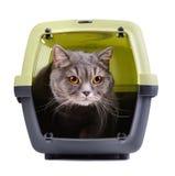 Britische Katze Lizenzfreie Stockfotos