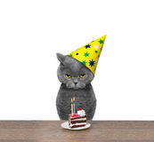 Britische Katze, die Geburtstag mit Stück des Kuchens feiert Lizenzfreie Stockbilder