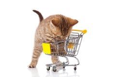 Britische Katze mit Einkaufswagen Stockfotografie
