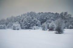 Britische Landschaft herein tief bedeckt im Schnee Lizenzfreie Stockfotografie