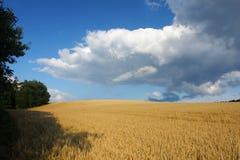 Britische Landschaft mit Feld Lizenzfreie Stockfotos