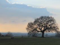 Britische Landschaftlandschaft Stockfoto