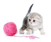 Britische Schätzchenkatze, die rote Schlaufe oder Kugel spielt lizenzfreie stockfotos