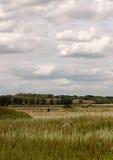 Britische Wiese der Ackerlandwiese draußen im Land mit einem Kuh grazi Stockfotos
