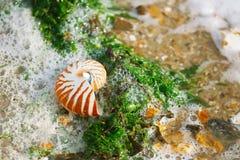 Britischer Sommerstrand mit Nautilusseeoberteil Stockfotos
