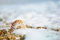 Britischer Sommerstrand mit Nautilusseeoberteil Stockbild