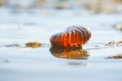 Britischer Sommerstrand mit Seeoberteil Stockbilder
