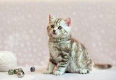 Britisches Kätzchen, das auf dem rosa Sofa sitzt Lizenzfreies Stockfoto