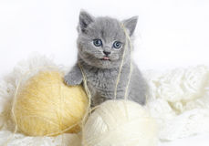 Britisches Kätzchen mit Kugeln der Wollen. Stockfoto