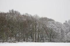 BRITISCHES schneebedecktes Feld und Wald Stockfotos