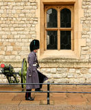 British Army Guard Duty. A guardsman of the Household Brigade (Irish Guards) on sentry duty wears a bearskin cap with a blue plume Royalty Free Stock Photo