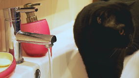British black cat drinks water from the tap stock video