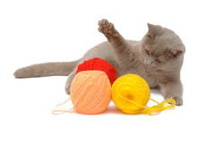 British blue cat and balls of colored thread stock photo