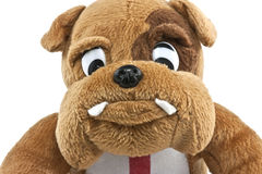 British bulldog close up. Of a cuddly toy Stock Photography