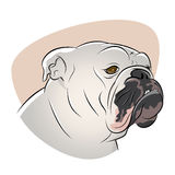 British bulldog illustration Royalty Free Stock Images