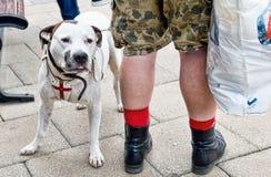 British Bulldog Stock Photos