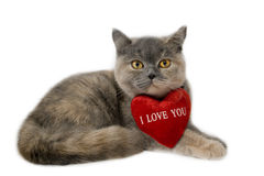 British cat. With sign I Love You Royalty Free Stock Photos