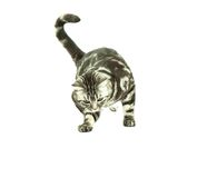 British cat playing Stock Images