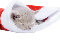 British cat in a red Santa& x27;s cap on white background Royalty Free Stock Photos