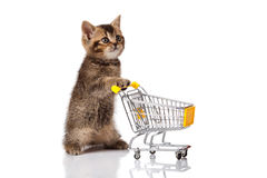 British cat with shopping cart Stock Photo