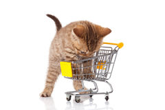British cat with shopping cart Stock Photography