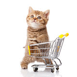 British cat with shopping cart. On white. kitten osolated Royalty Free Stock Photo