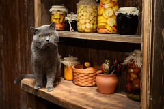 British cat sits on the table on background of vintage rack with banks Stock Photos