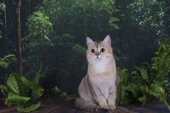 British cat in the wild forest Stock Photos