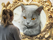 British cat and a young woman Stock Photos