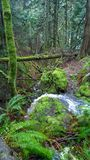 British columbia,coast,rain forest,water fall,pender island south Stock Images