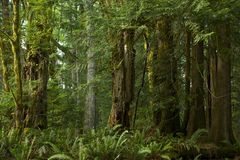 British Columbia Forest Stock Photography